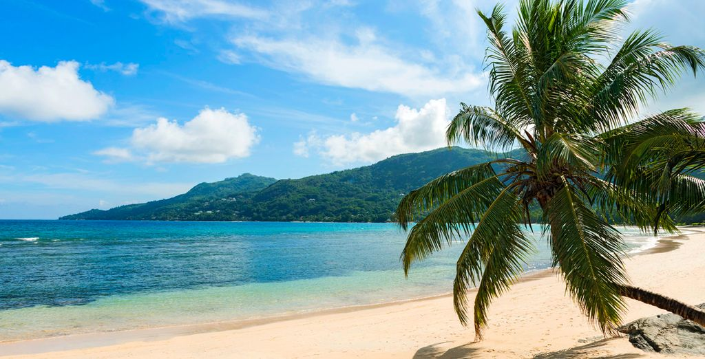 ou prenez un bain de soleil sur la plage