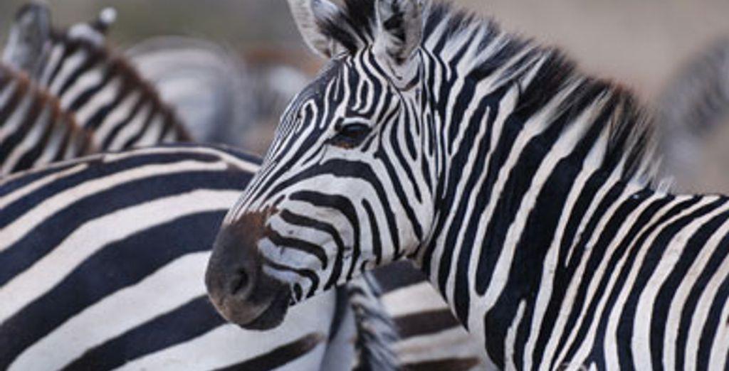 - Deux safaris au Kenya avec extension balnéaire :
