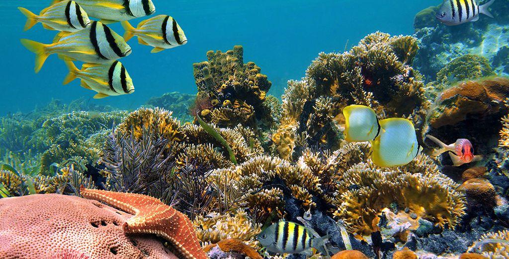 Vous plongerez aussi au milieu d'une faune aquatique impressionnante