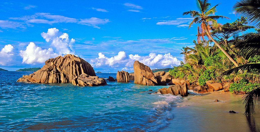 Escapade de la baie de Sainte Anne, palmier et côtes rocheuses