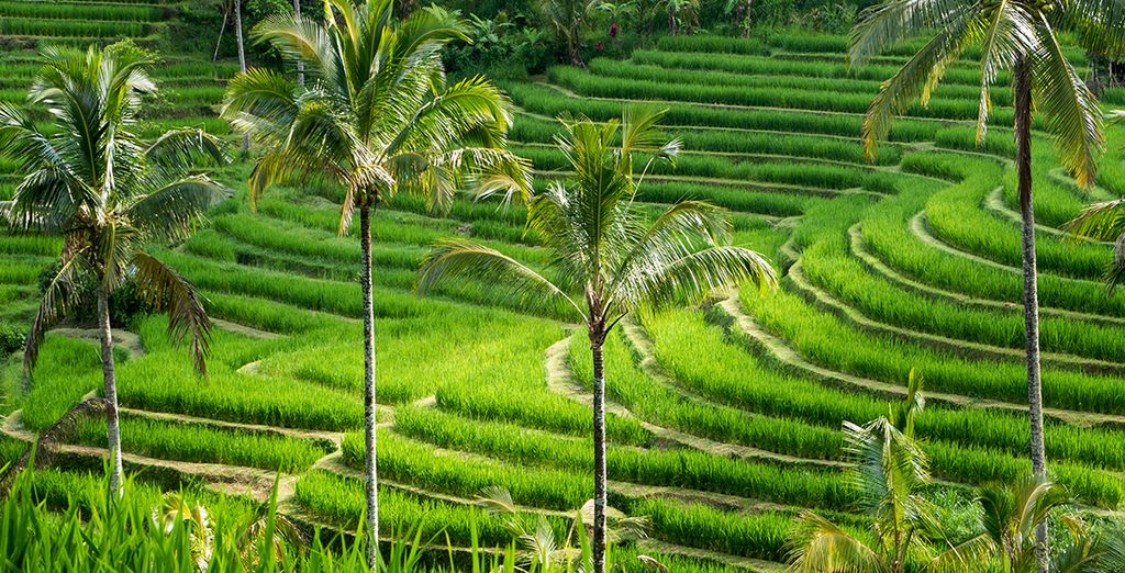 Sans oublier d'incroyables paysages, et notamment ses rizières