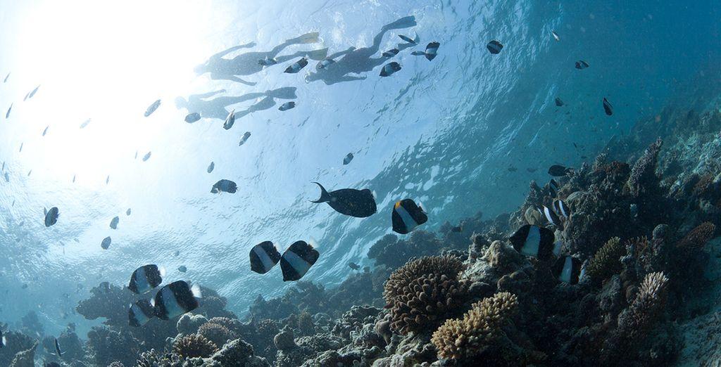 Une faune marine impressionnante attend les amateurs de plongée