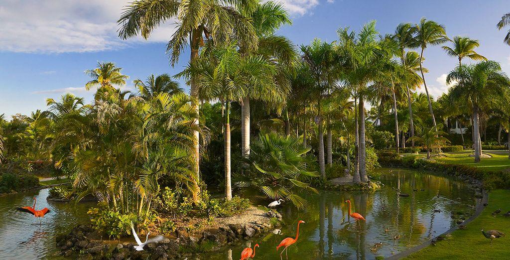 Vous aimerez vous éveiller chaque matin au coeur d'un des plus beaux jardins tropicaux de l'île...