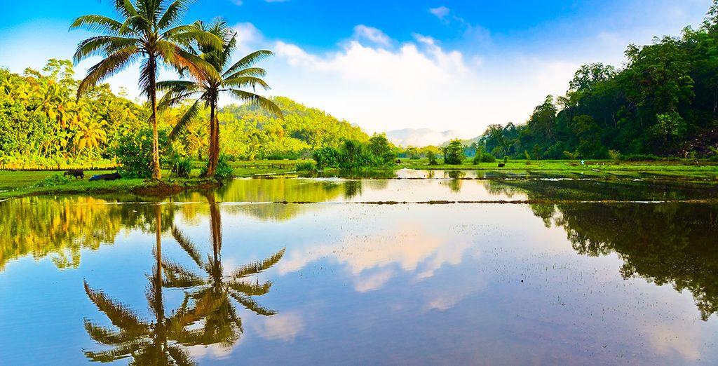 et paysages de rizières...