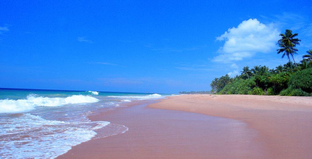 Une chose est sûre, cette perle d'émeraude en plein océan Indien vous envoûtera...