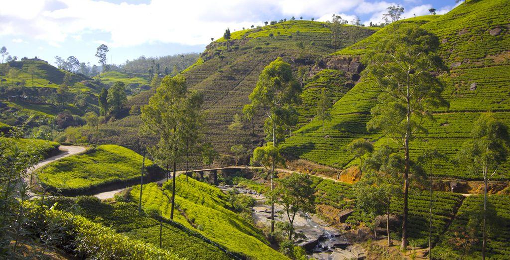 La nature préservée sri-lankaise est pleine de trésors !