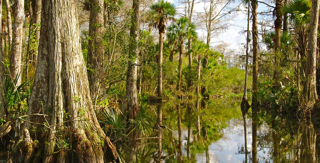Les Everglades seront ensuite un impressionnant rendez-vous