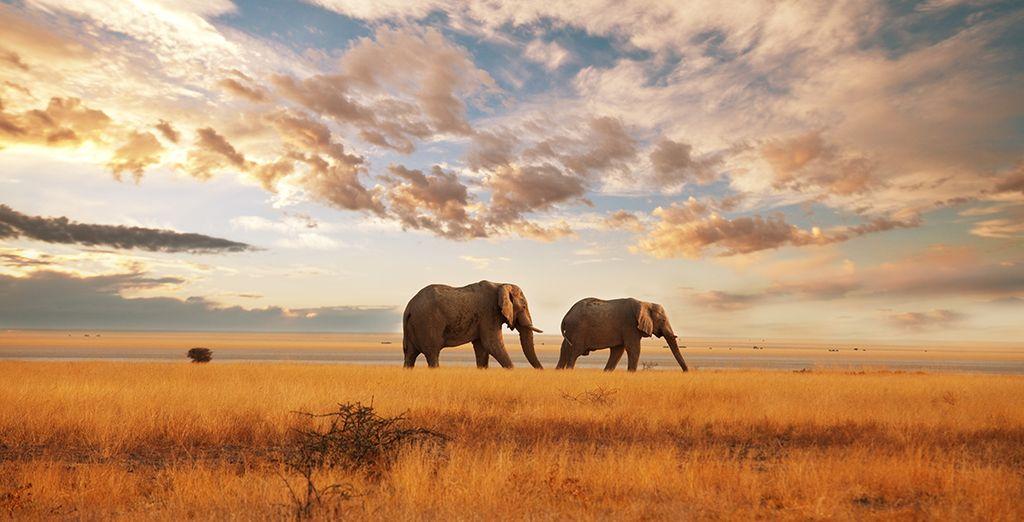 Puis partez à l'aventure au cours d'un safari de deux ou trois nuits