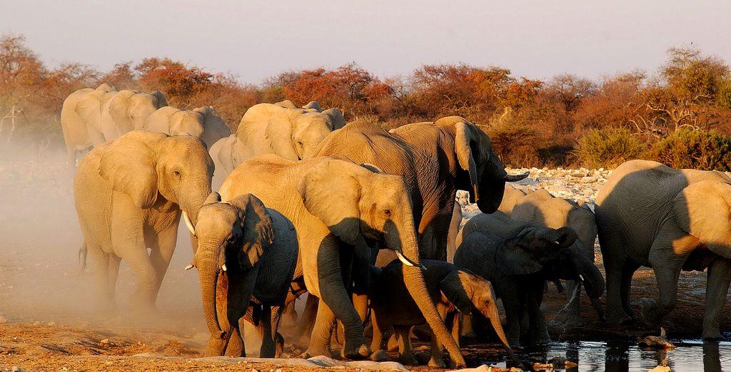 Circuit Horizons de Namibie en 7, 9 ou 10 nuits