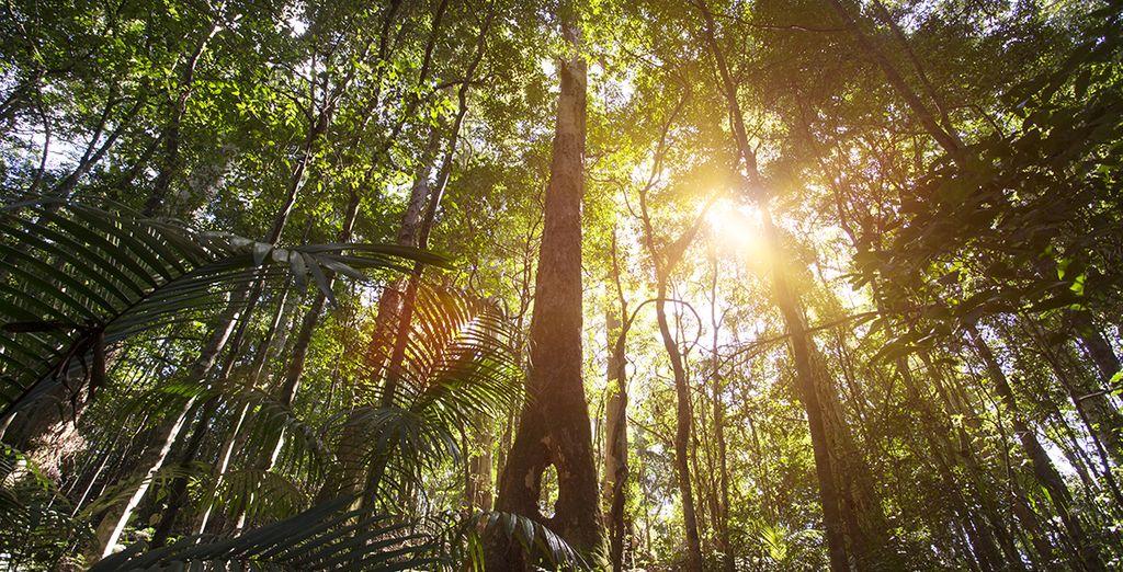 La forêt du Parc National de Wooroonooran