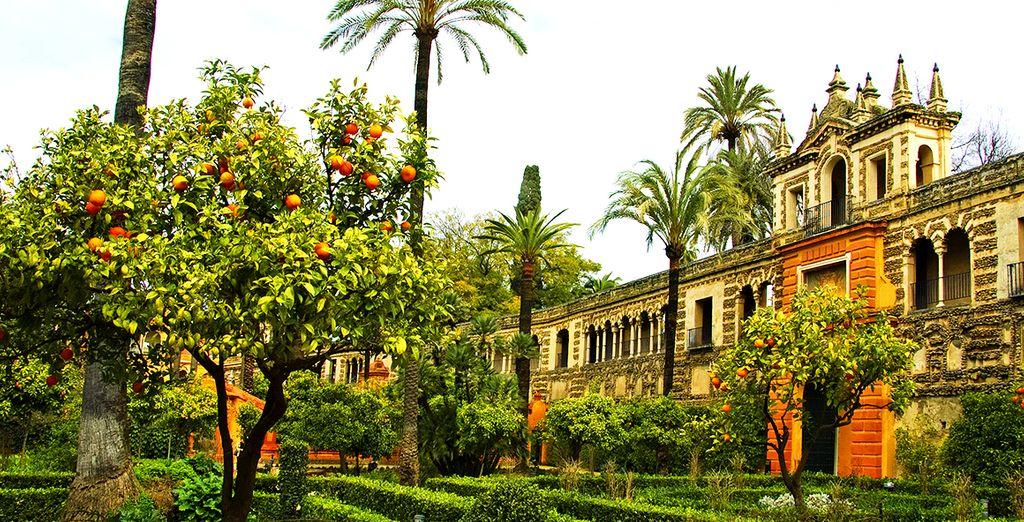 Flânez dans ses jardins d'orangers...