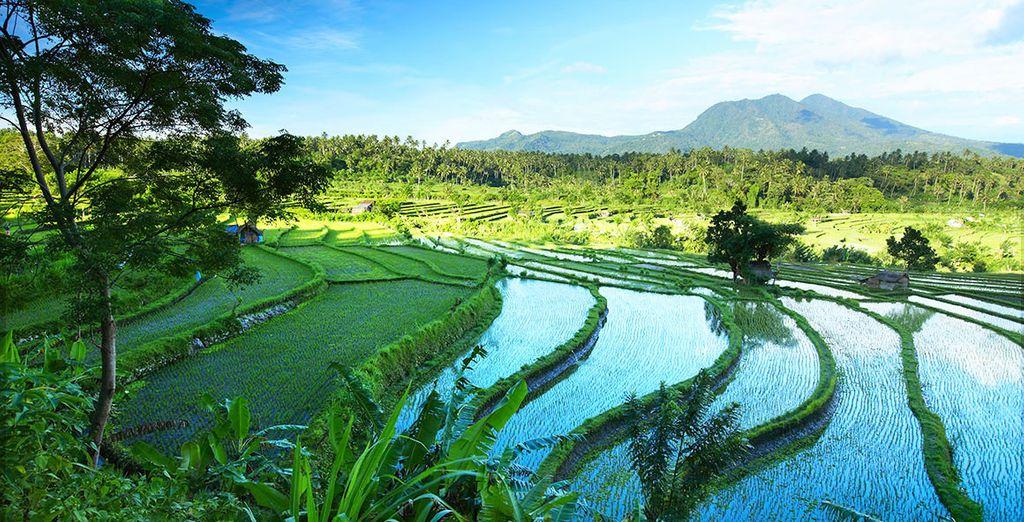 Laissez-vous transporter par les merveilles de Bali...