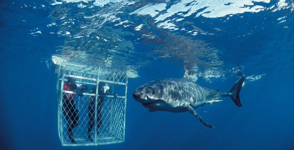 Laissez-vous tenter par une plongée en cage