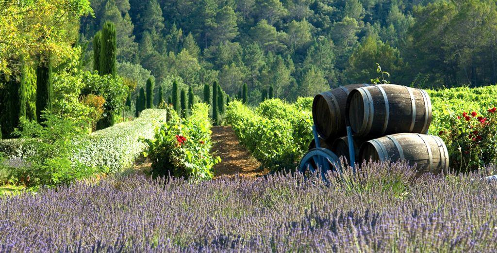 Niché au cœur de la Provence