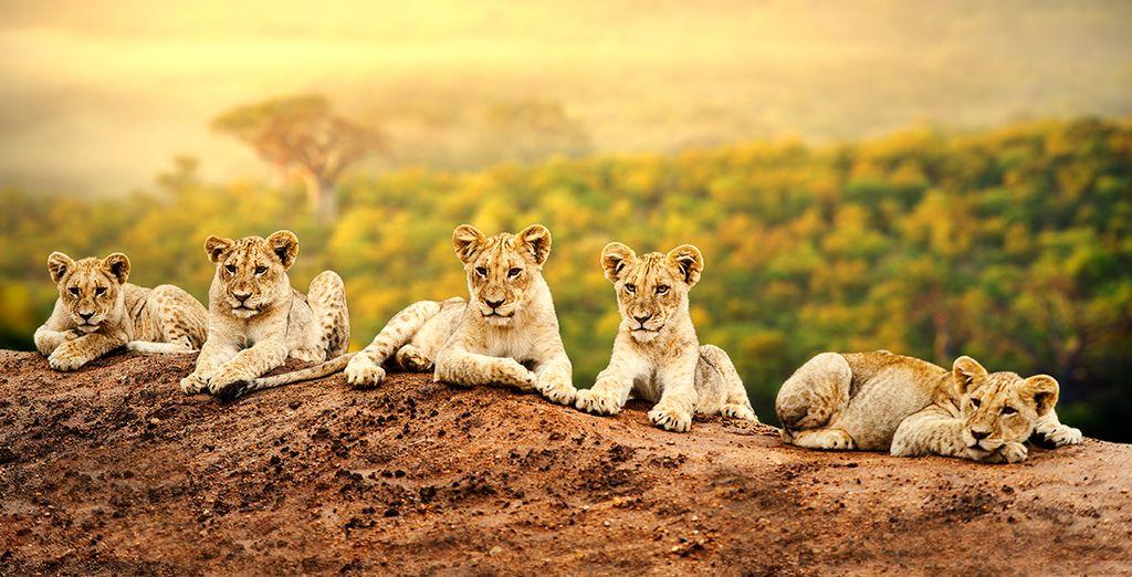 Préparez-vous à découvrir les plus belles facettes du Kenya !
