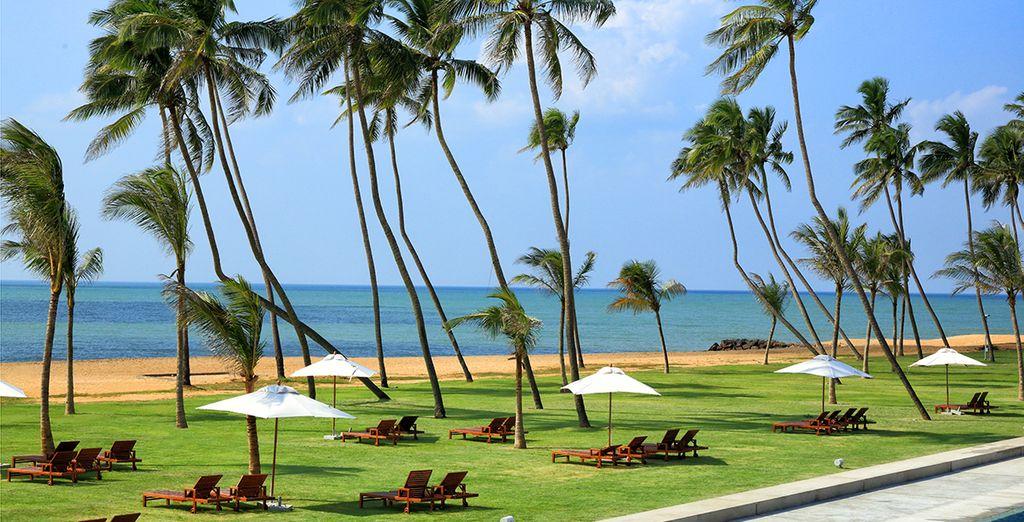 Une plage de sable fin bordée de cocotiers...