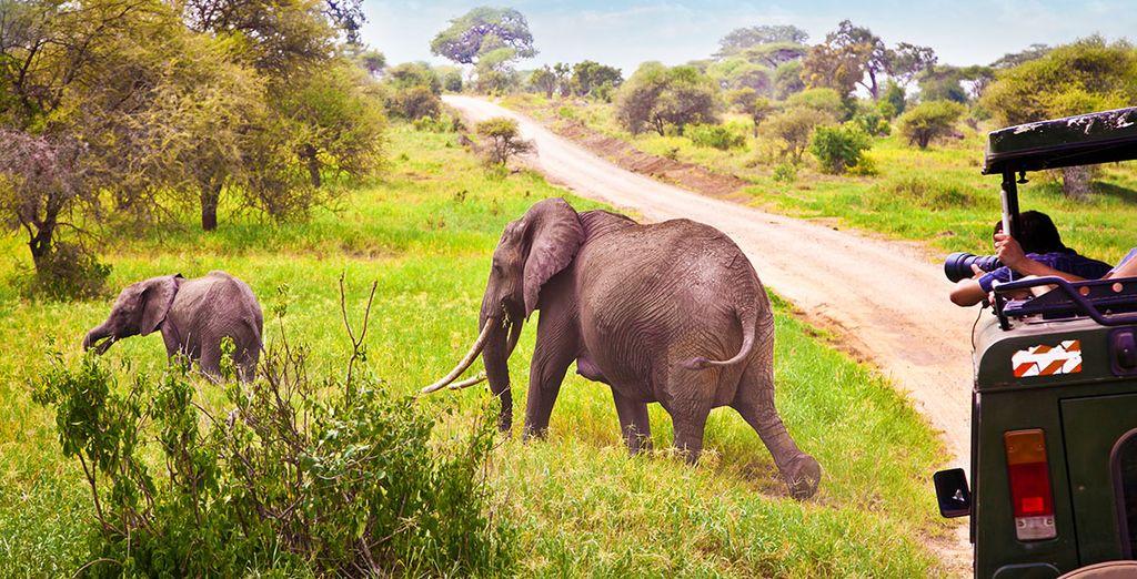 Avant de prendre la route pour un safari passionnant