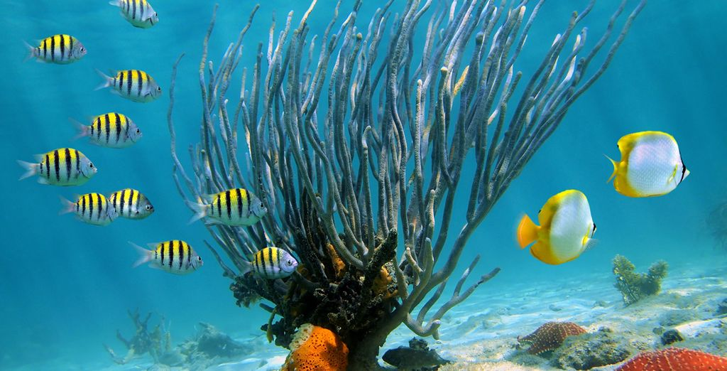 Et surtout, ne repartez pas sans avoir découvert les splendides fonds marins autour d'Isla Catalina