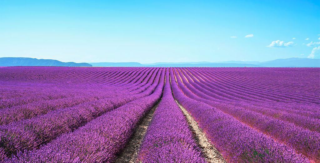 Bienvenue en Provence !