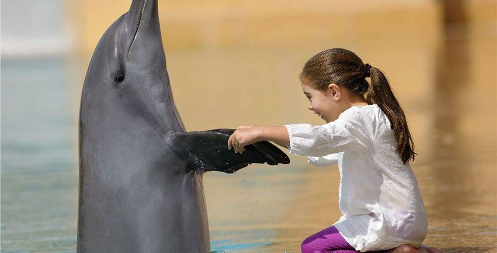 Offrez-vous une séance photo avec un lion de mer ou un dauphin