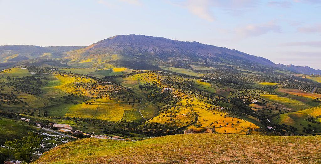 Vous poursuivrez à travers les collines d'oliviers