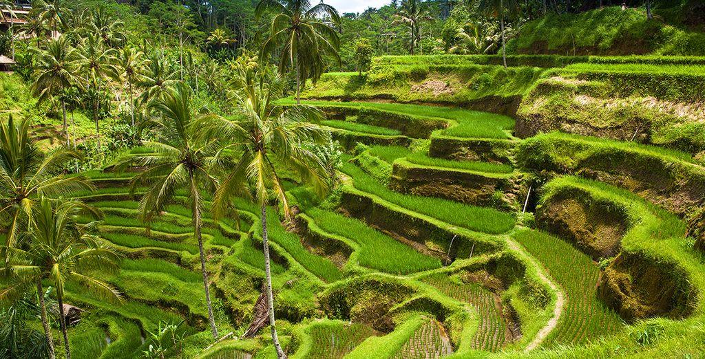 Partez pour Bali