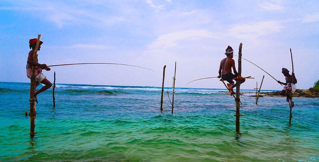 La perle de l'océan Indien vous dévoile son littoral préservé, ses images pittoresques...