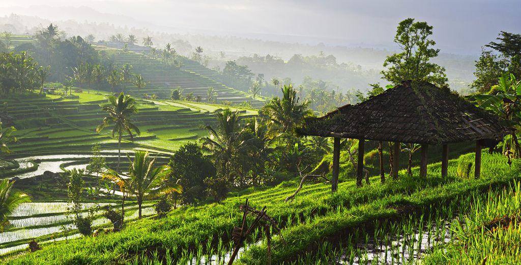 Partez à la découverte des paysages enchanteurs d'Ubud