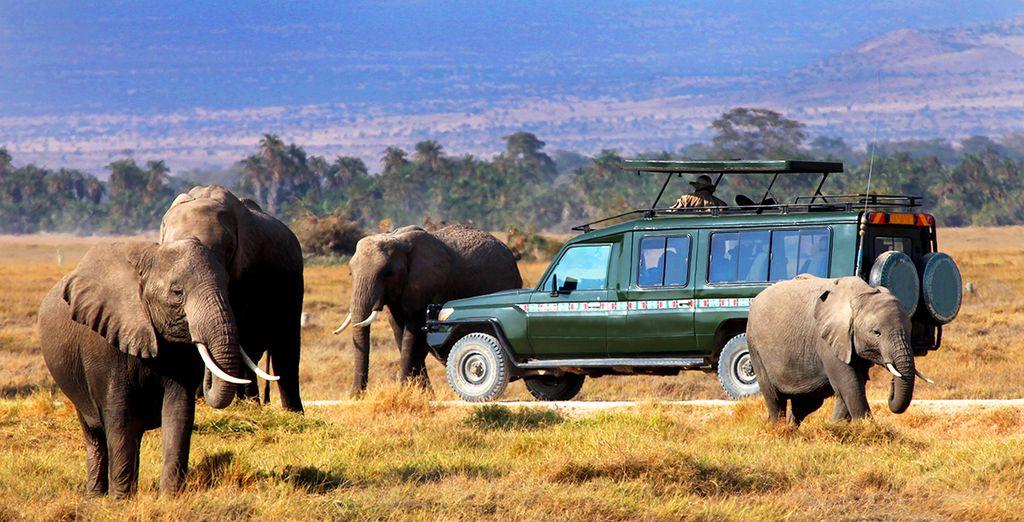 Puis vibrerez au cours d'un safari palpitant