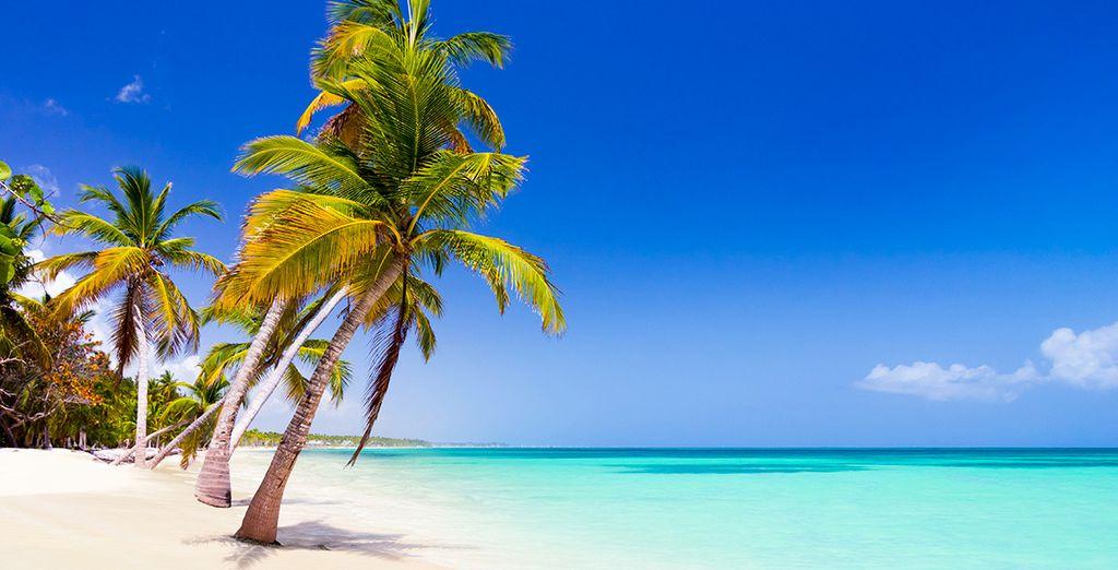 Plongez dans le décor idyllique de la République Dominicaine !
