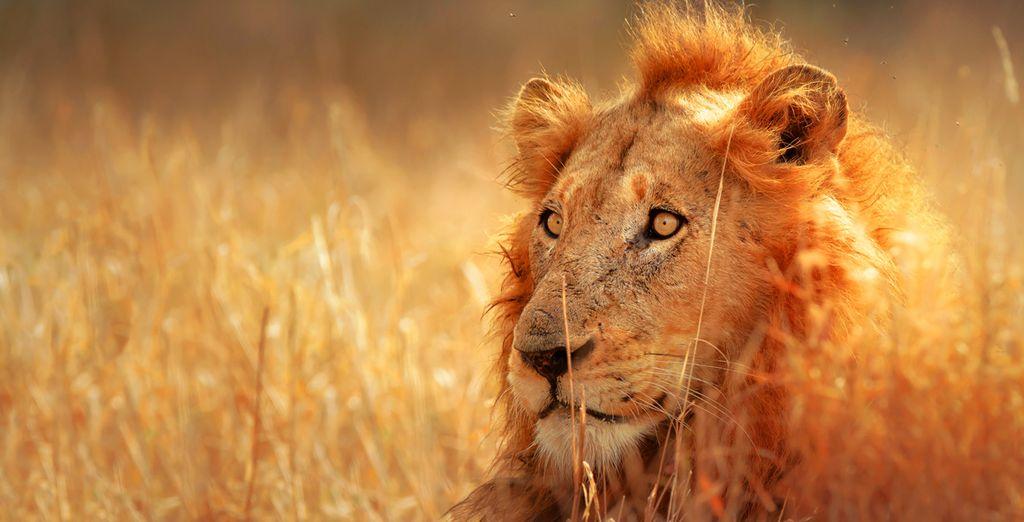 Vous découvrirez la nature majestueuse de l'Afrique comme vous en rêviez