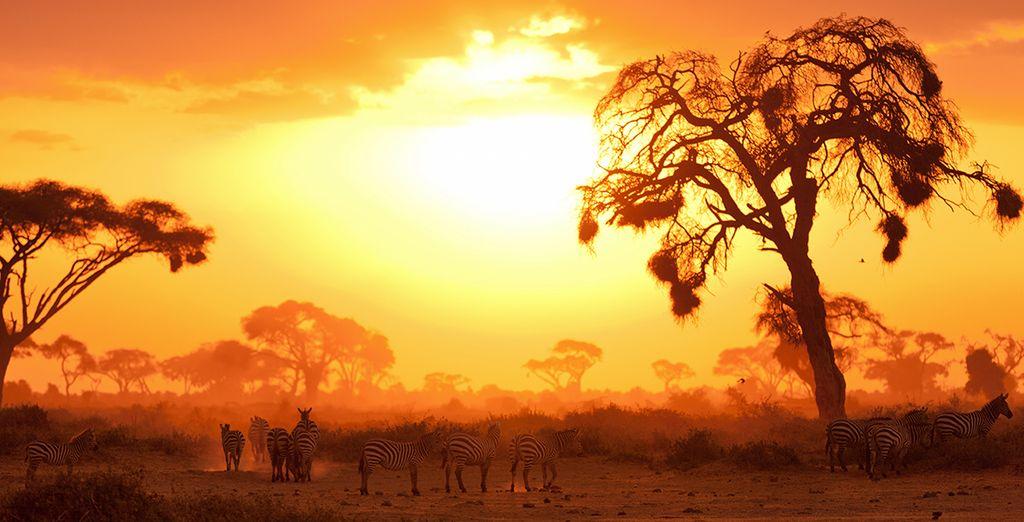 Découvrez les animaux sauvages lors d'un safari au Kenya en Décembre