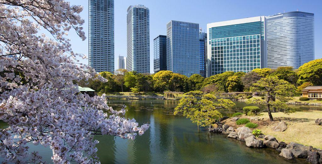 Photographie de la ville de Tokyo au Japon, cerisier en fleur et grattes-ciels