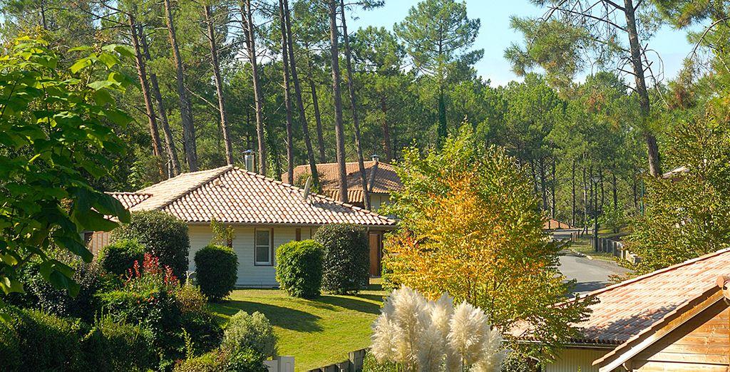 Villas de vacances à proximité de la forêt des Landes