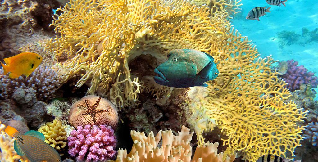 Découverte des fonds-marins et des barrières de corail dans les caraïbes