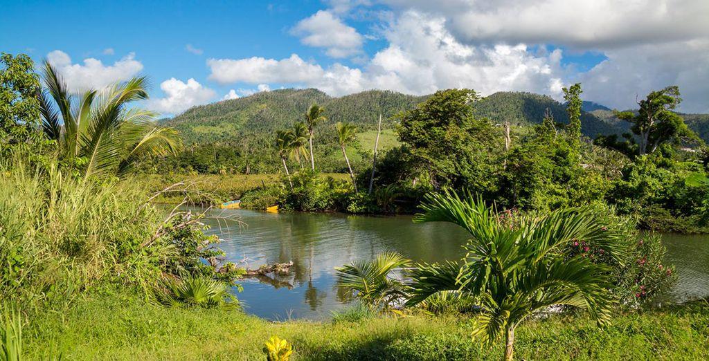 Guadeloupe et nature luxuriante