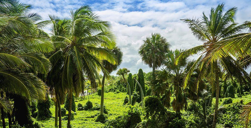 Photographie des Antilles et de ses forêts tropicales