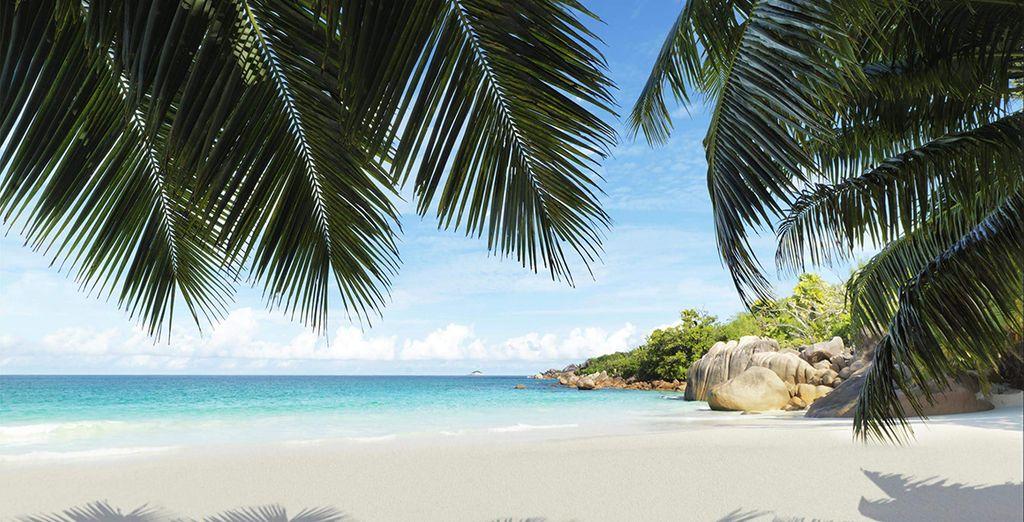 Des vacances de rêves aux Seychelles