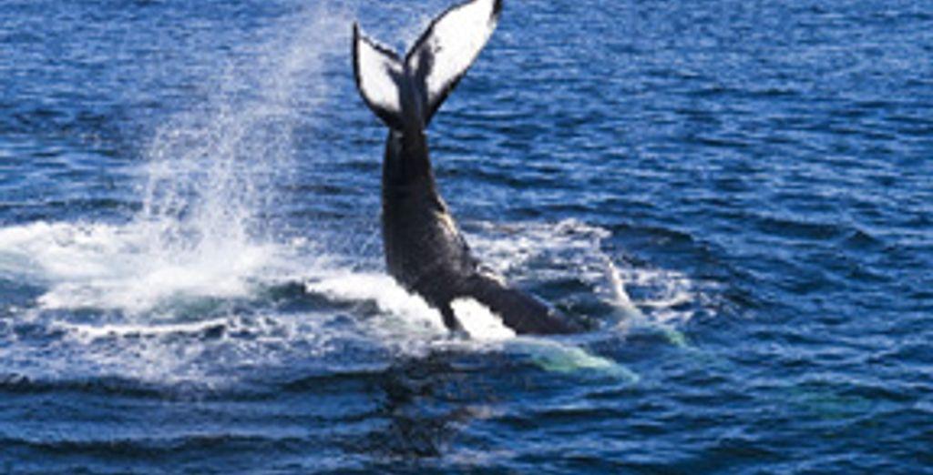Option baleines