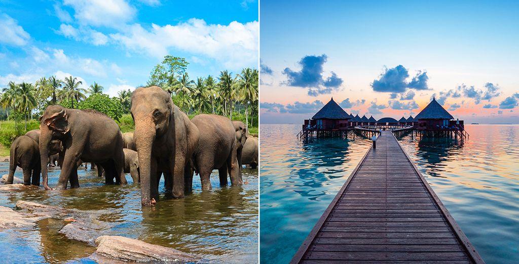 Combiné Sri Lanka et Maldives avec Voyage Privé