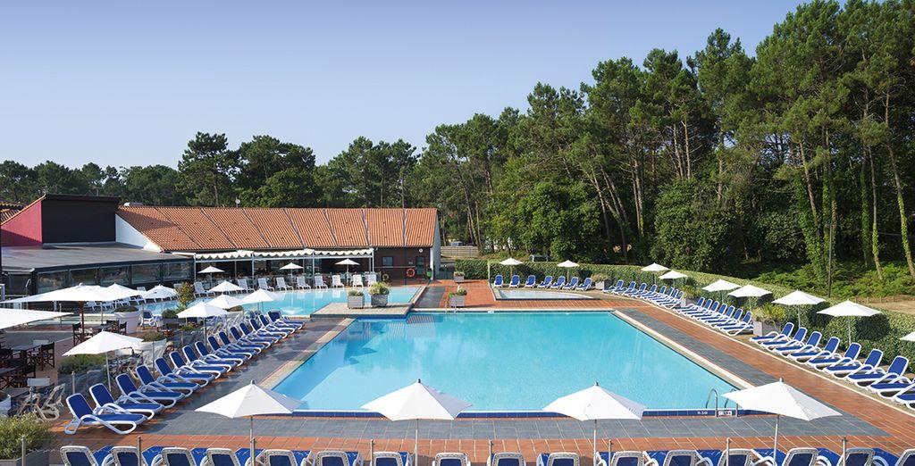 Détendez-vous à la piscine, arborée de splendides pins