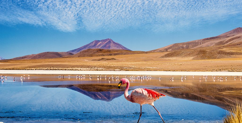 Photographie de la Bolivie et du Laguna Colorada