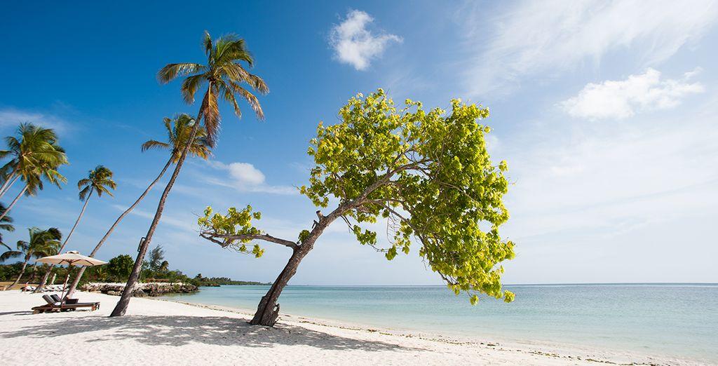 Suivez-nous sur la plage de sable blanc de l'hôtel The Residence à Zanzibar !