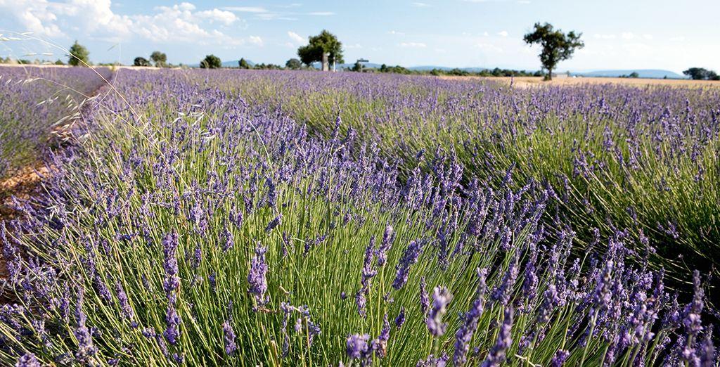 Et la Provence vous charmera !