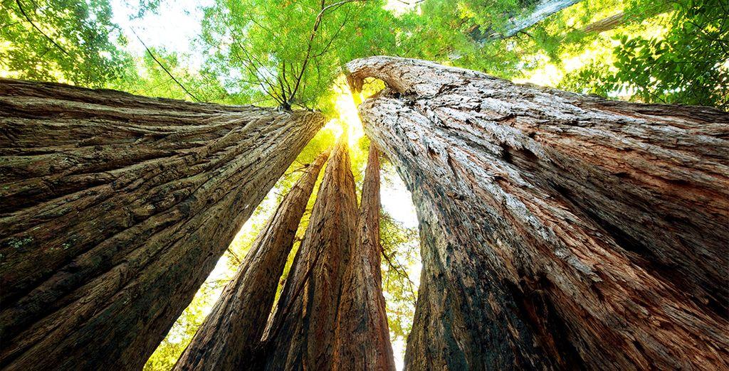 Et ferez une halte au Parc National de Sequoia