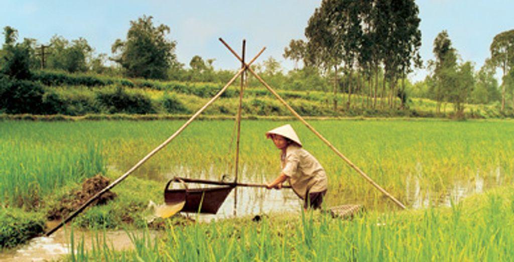 - Circuit Vietnam