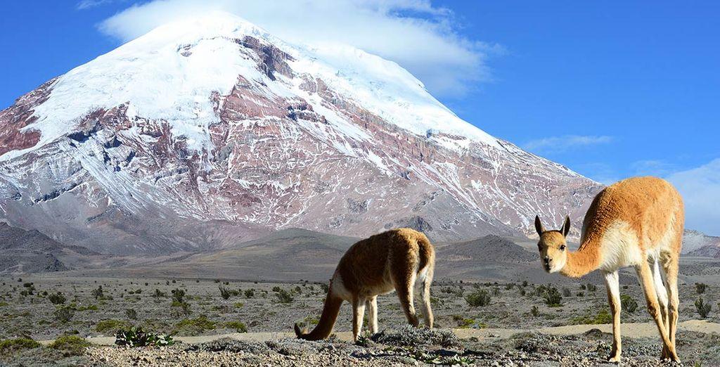 Vous en prendrez plein les yeux entre les panoramas andins...