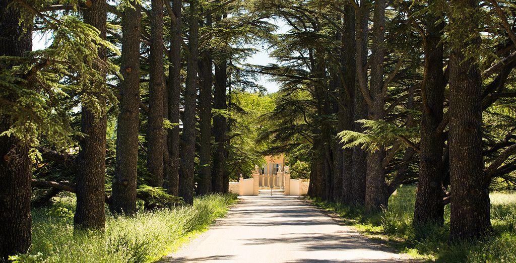Prenez la route de la Provence