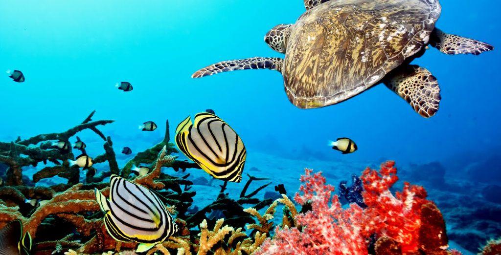 Partez faire de la plongée sous-marine en Guadeloupe avec les voyages pas cher Voyage Privé