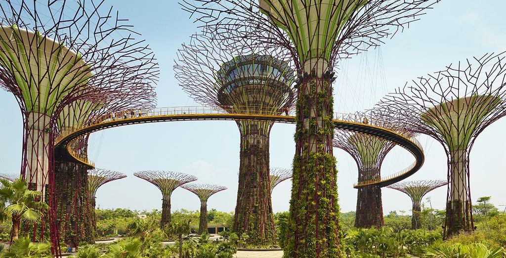 Vue des tours végétales de Gardens By the Bay à Singapour
